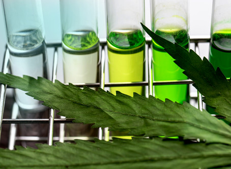 IMPORTANCE OF QUALITY CONTROL OF MEDICAL CANNABIS