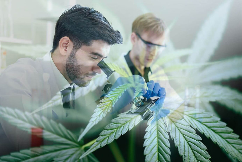 cf-forscher-entdecken-neue-cannabinoide-