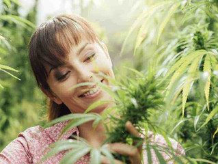 Cannabis and menopause: can symptoms be improved?