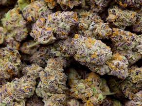 Cepas de cannabis nativas de México