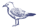 esboçado Seagull