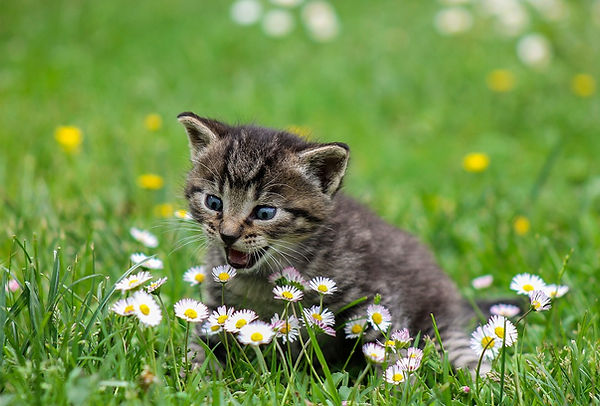 kitty-flowers.jpg