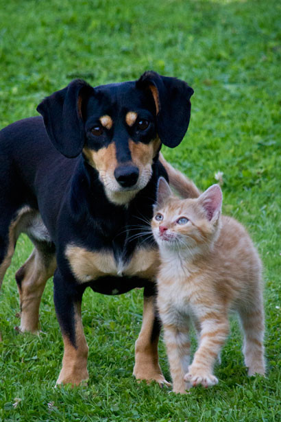 CBD oil for pets and the science behind it