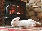 bunny-stasis-cbd-treatment.jpg