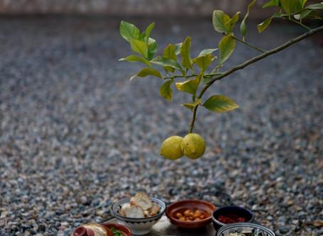 Ayurvedische Ansätze in unserer Ernährung und generelle Beratung bei Ernährungsumstellungen