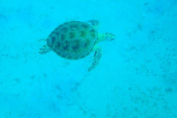 turtle coron Palawan