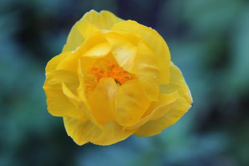 Inspiration de Fleurs