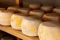ruedas-queso-madurado-primer-plano_23-21