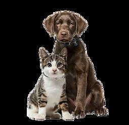 iStock-1069530994_puppy_kitten_Collars.p