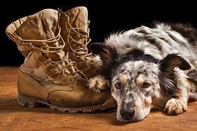 iStock-509489492_military_dog.jpg