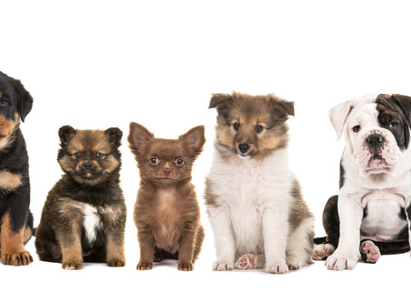 Top 10 Natural Treats & Chews for Your Puppy