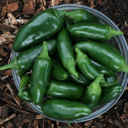 Fresh Jalapeños (250 grams)