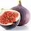 Thumbnail: Fig Tree - Adams Purple