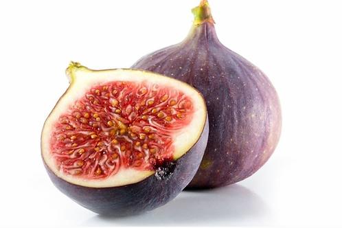 Fig Tree - Adams Purple