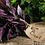 Thumbnail: Purple Basil Bunched