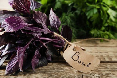 Purple Basil Bunched