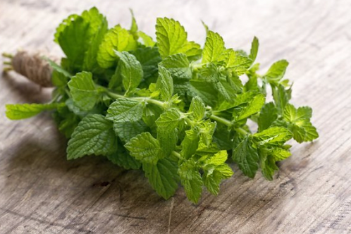 Mint Bunched