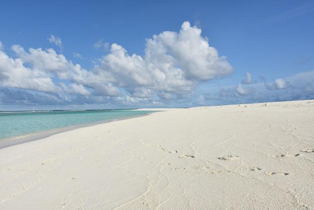 Moonshell Crusoe 'Sand Bank' Excursion