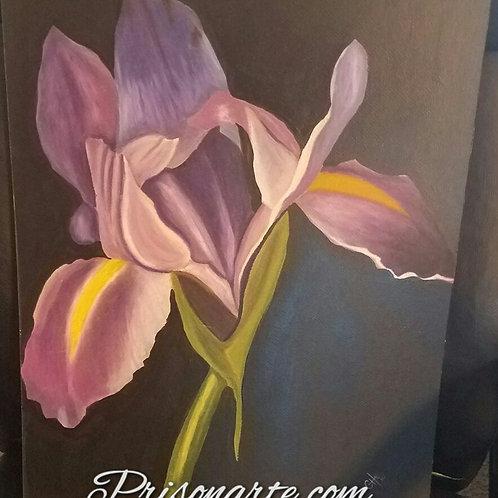 "Purple Iris- Artist ""Che"""