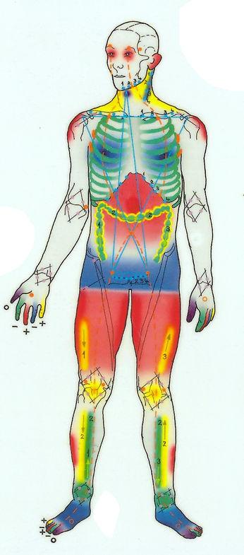 Kroppens energisoner ifølge polaritetsterapi
