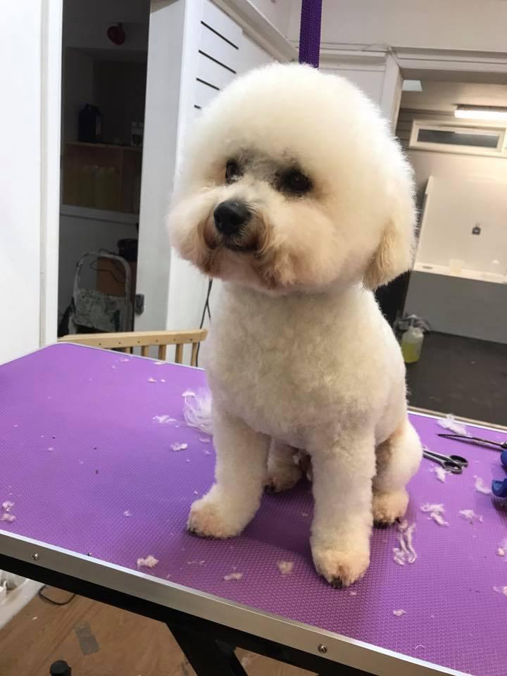 bath brush and trim