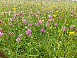 Species rich grassland