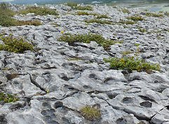 Burren pavement