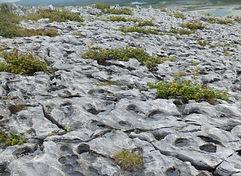 Burren pavement