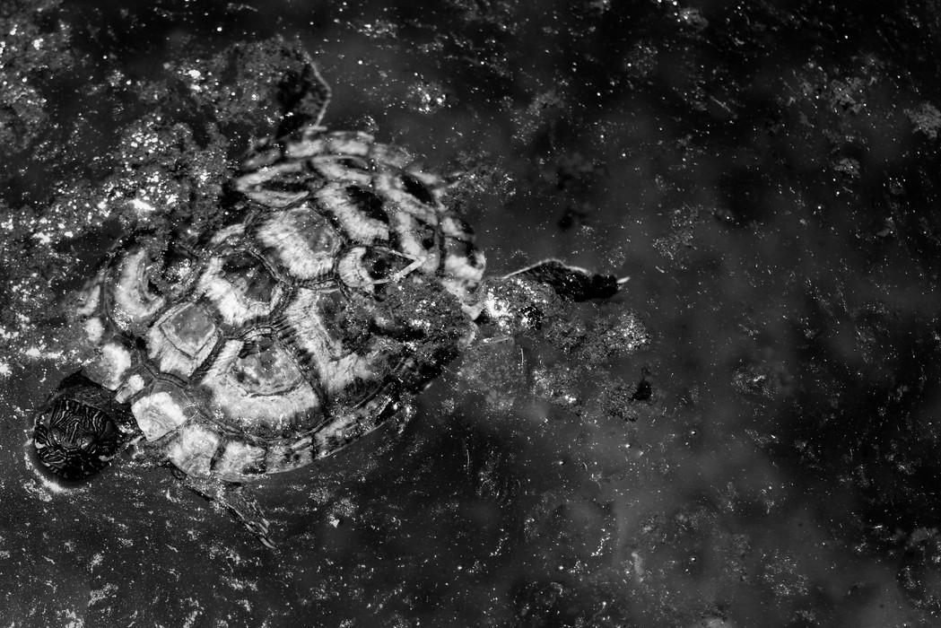 turtleinspace.JPG