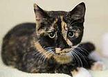 Adopt.cat.jpg