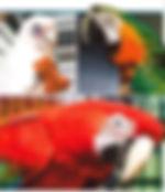 cb.birds.jpg