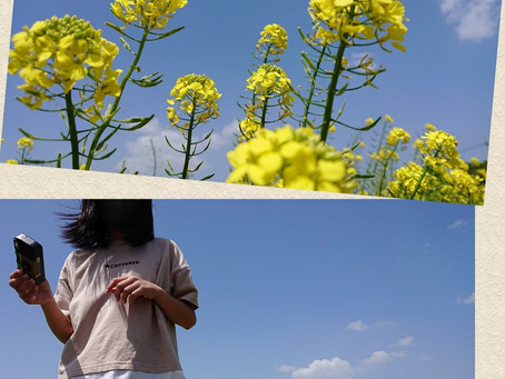 大根島にて母の日イベント