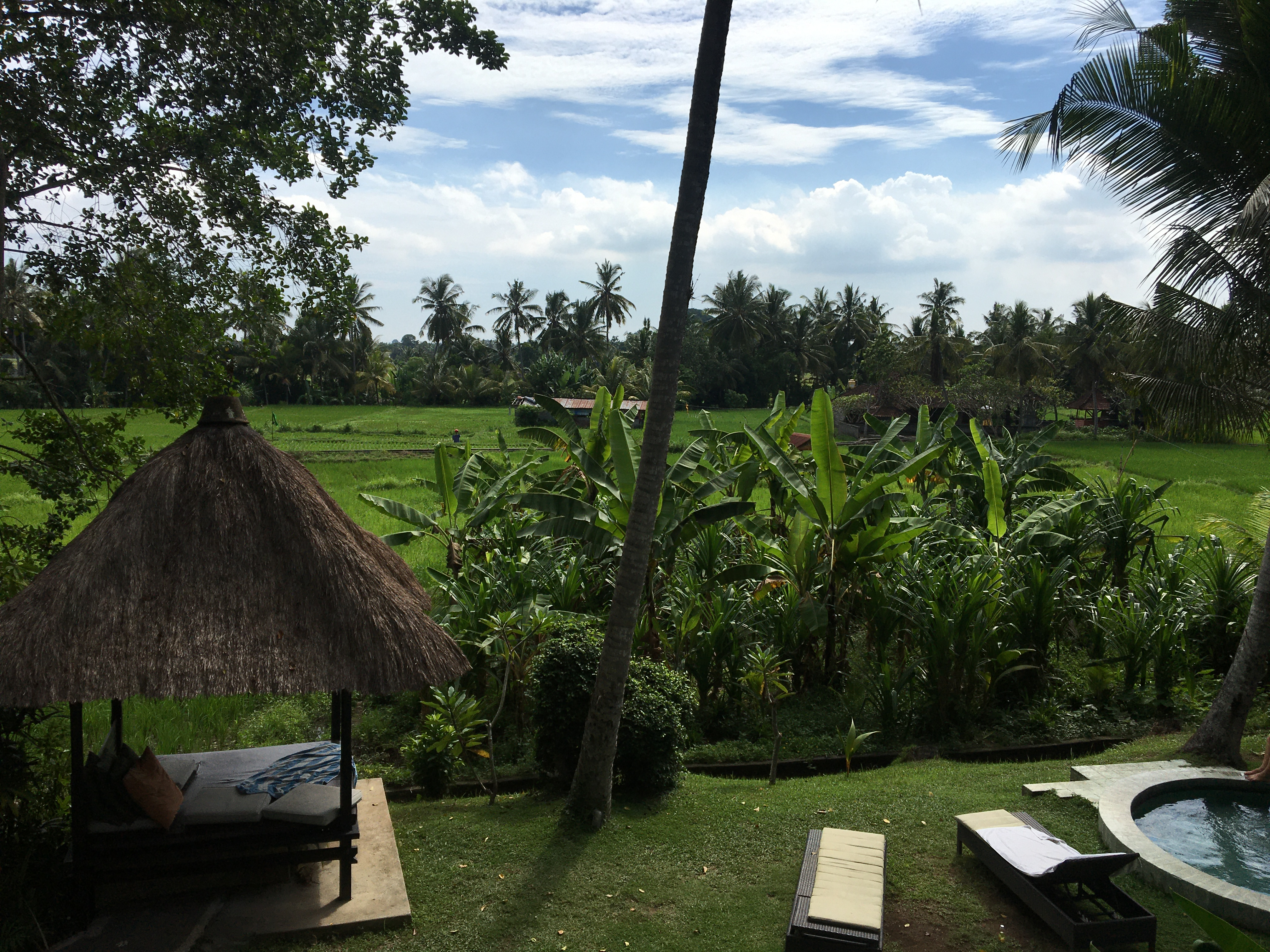 View of the ricefield and the pool