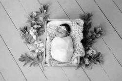 Baby Cairo DSC_1552-Edit-Edit.jpg