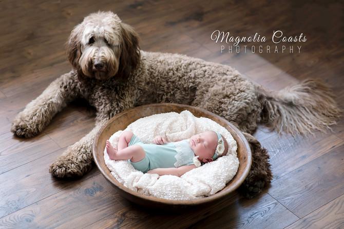 Toronto West / Mississauga East Photographer | B is for Bowen | Toronto Newborn
