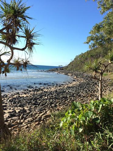we saw a koala on this hike.