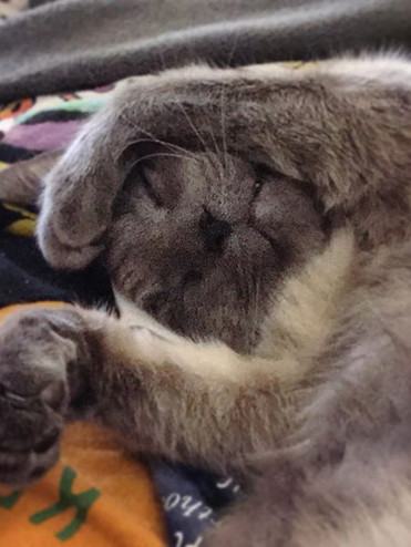 sleepy nug's main talent #catexanderhameowlton