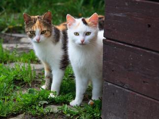 7 причин завести вторую домашнюю кошку. Не думали об этом? А зря.