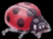 Ladybird Mini Munchkins Preschool