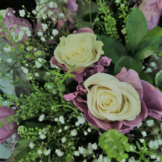 marshmallow roses lilac