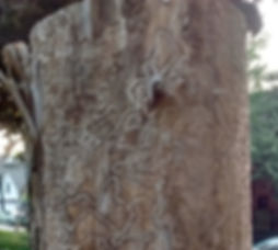 stump close up copy.jpg