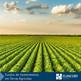 Fundos de Investimentos em Terras Agrícolas
