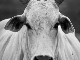 Paralisação argentina aumenta preços globais da carne