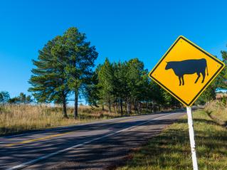Indústria de carnes celebra novo status sanitário do Rio Grande do Sul