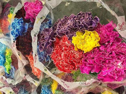 ELITE FLOWERS 0.50  CARNATION MULTICOLOR