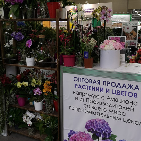 Выставка в Москве 2019