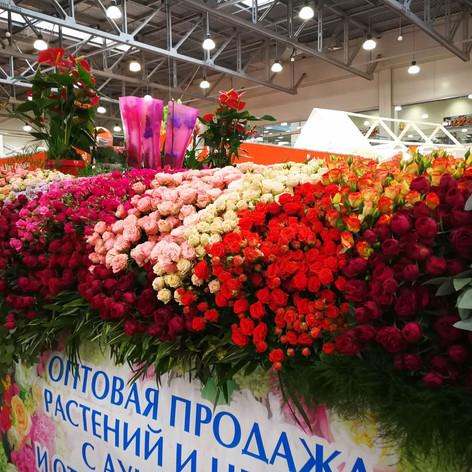 Выставка в Москве 2017