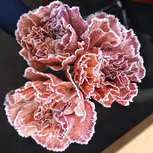 Carnation MISTER PINK