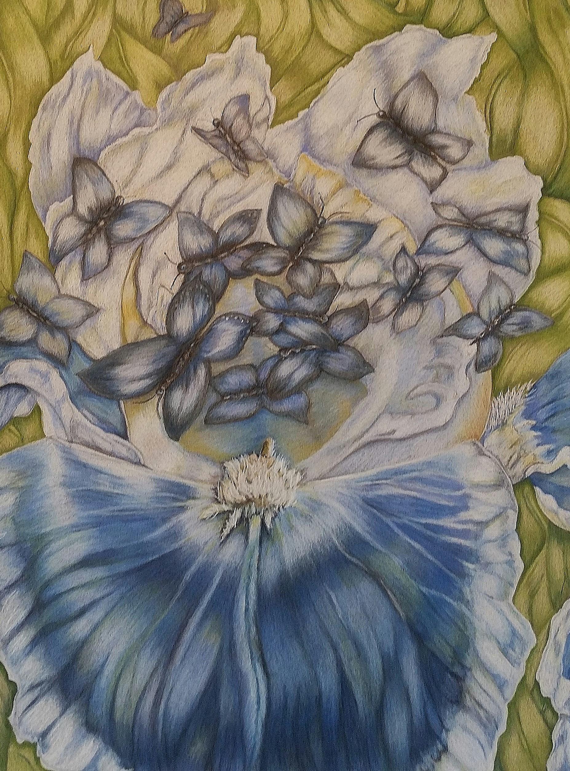Iris Blue Butterflies