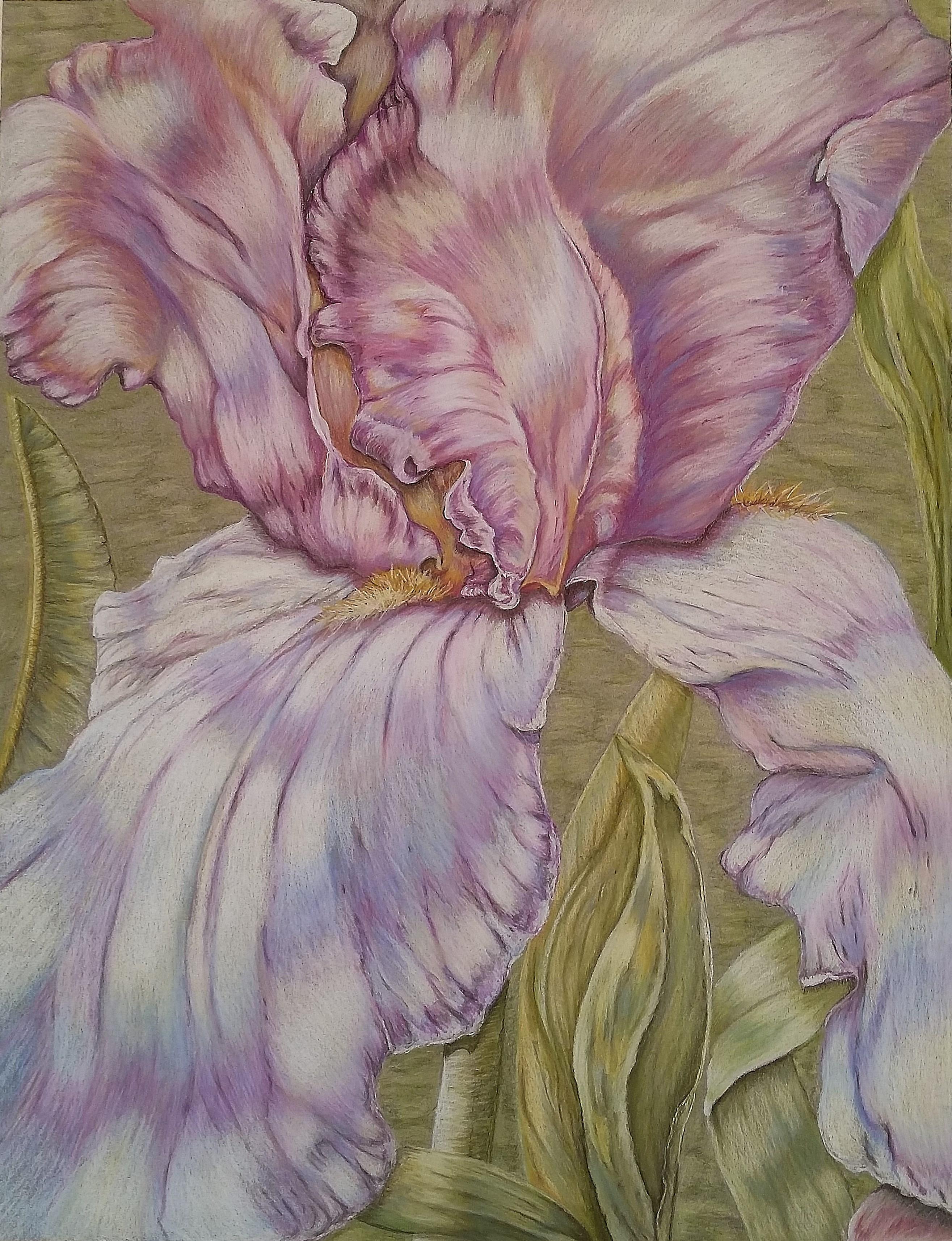 Iris in Lilac
